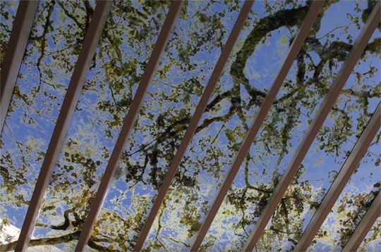 Artwork. Blue sky and tree branches in roof structures.